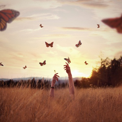 butterfly, field, hipster, love, photography, sunset, tumblr, tumblr girl