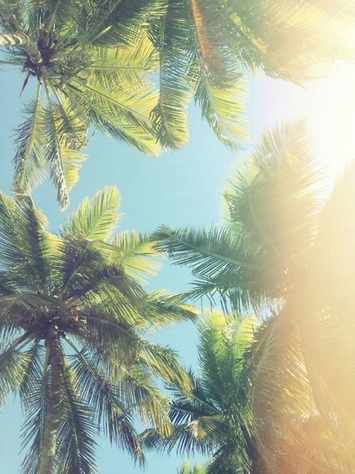 fashion, hipster, hot, love, palm trees, summer, summertime, tumblr