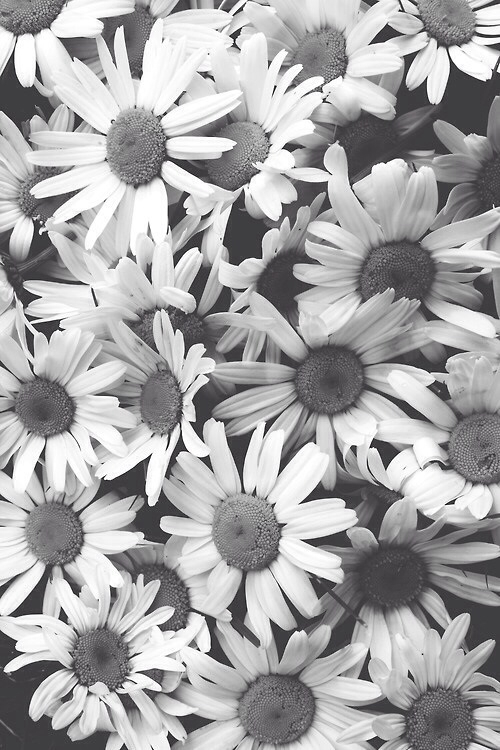 background, black, blackandwhite, cute, flowers, header, white