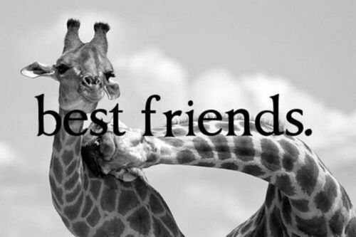 best friends, black and white, cute and forever