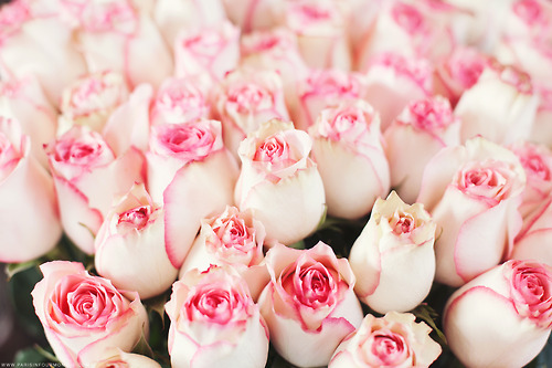 beautiful, flowers, pink and roses