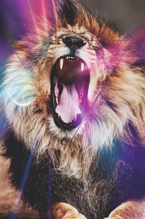 Lion hipster - photo#3