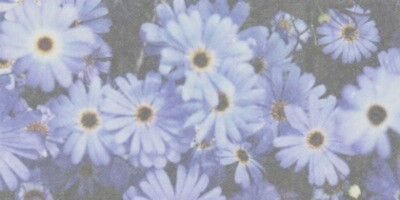 background, flowers, hipster, indie, love, soft grunge ...