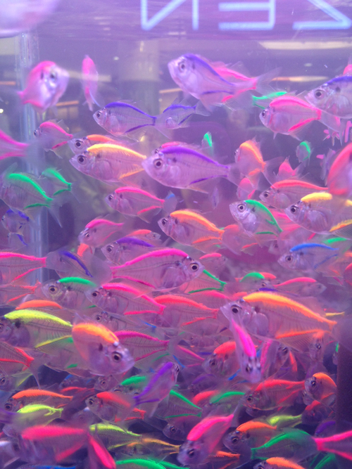 Blue cool fashion fish fishes fluo geen happy neon for Yellow rainbow fish