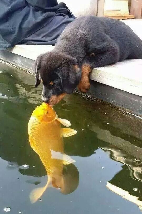 Adorable animals curious cute dog fish kiss for Water dogs fish