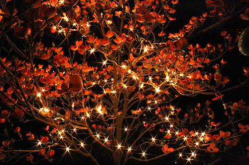 Fall Color String Lights : Untitled via Tumblr - image #3629404 by KSENIA_L on Favim.com