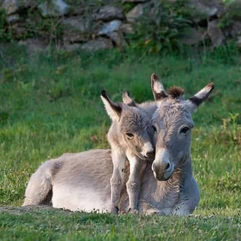 baby animals, cute animals and donkey