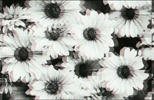 black and white, daisy, grunge, hipster, rock - image ...
