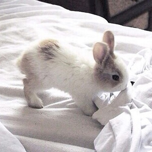 adorable, animal, baby, bed, bunny, carrots, colours, cute, ears, eyes, fashion, girls, hairstyle, hug, kisses, love, morning, nose, paws, pet, playing, sleeping, small, tail, toys, wallpaper