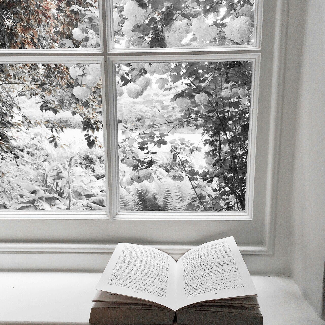read a book, snow