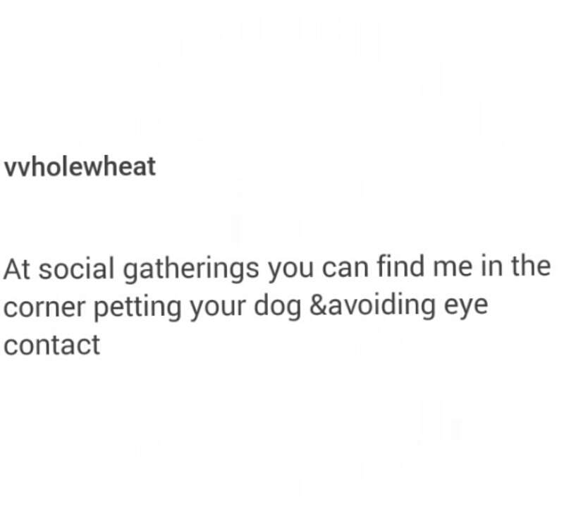 anxiety, dogs, introvert and shy
