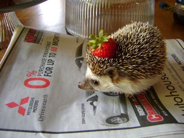 animals, cute, pretty, strawberry