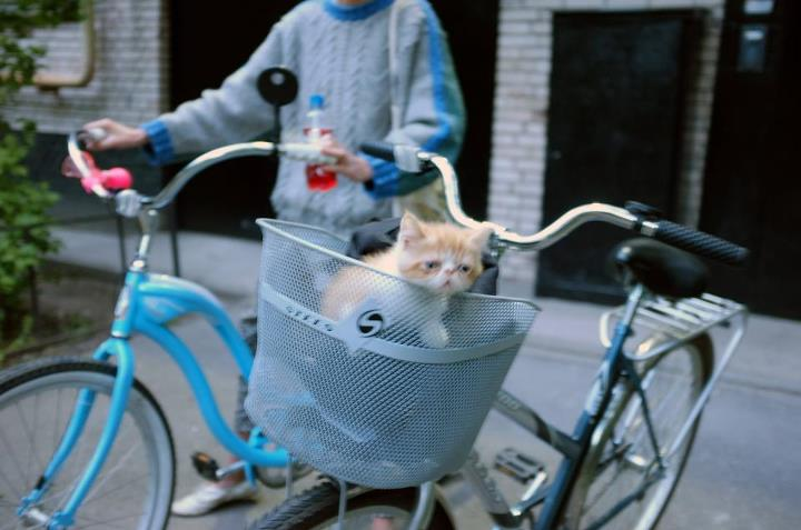 bike, kitten, basket, funny