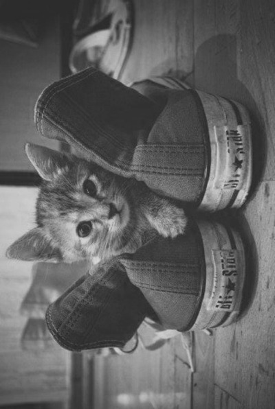 black and white, converse, cat