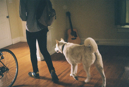 boy, dog, animal, guitar, room