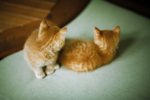 cat, cats, orange, kitty, beautiful