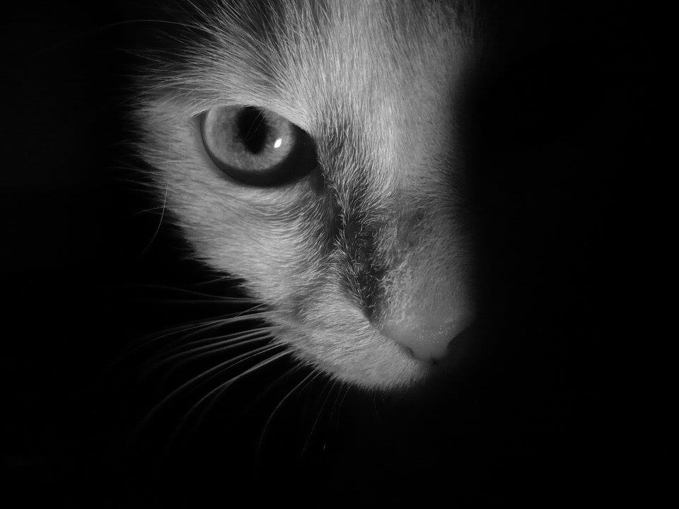 cat, eyes, black and white