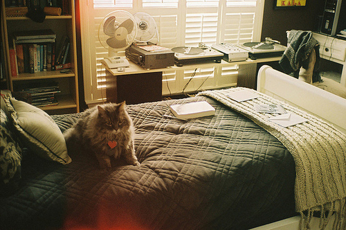 cat, heart, love, room, bed