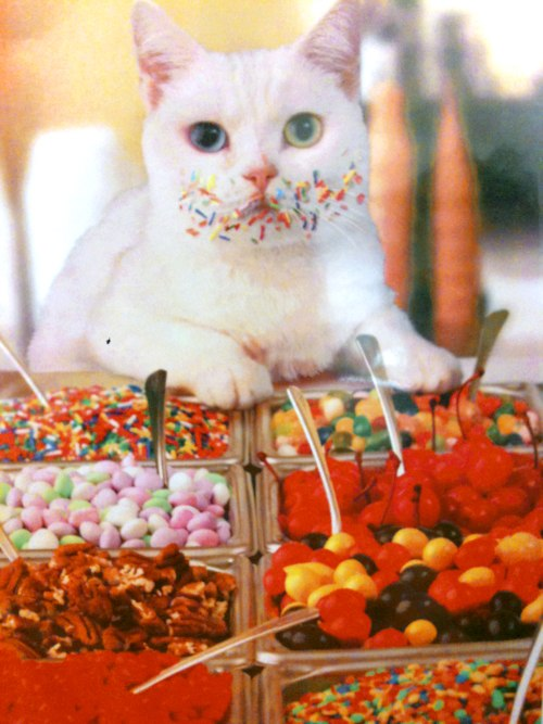 cats, candy, sweets, colorful