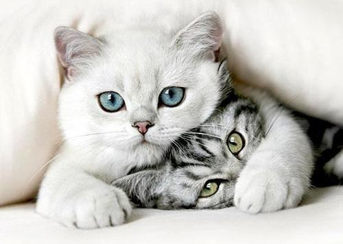 cats, freinds, cute