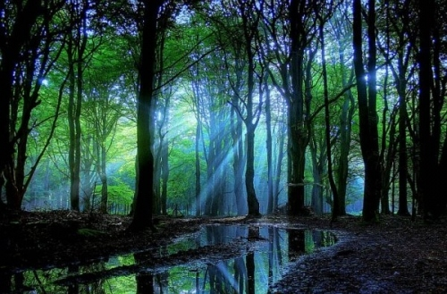 forest, nature, sun, water, lake