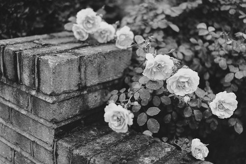 indie, flowers, black and white