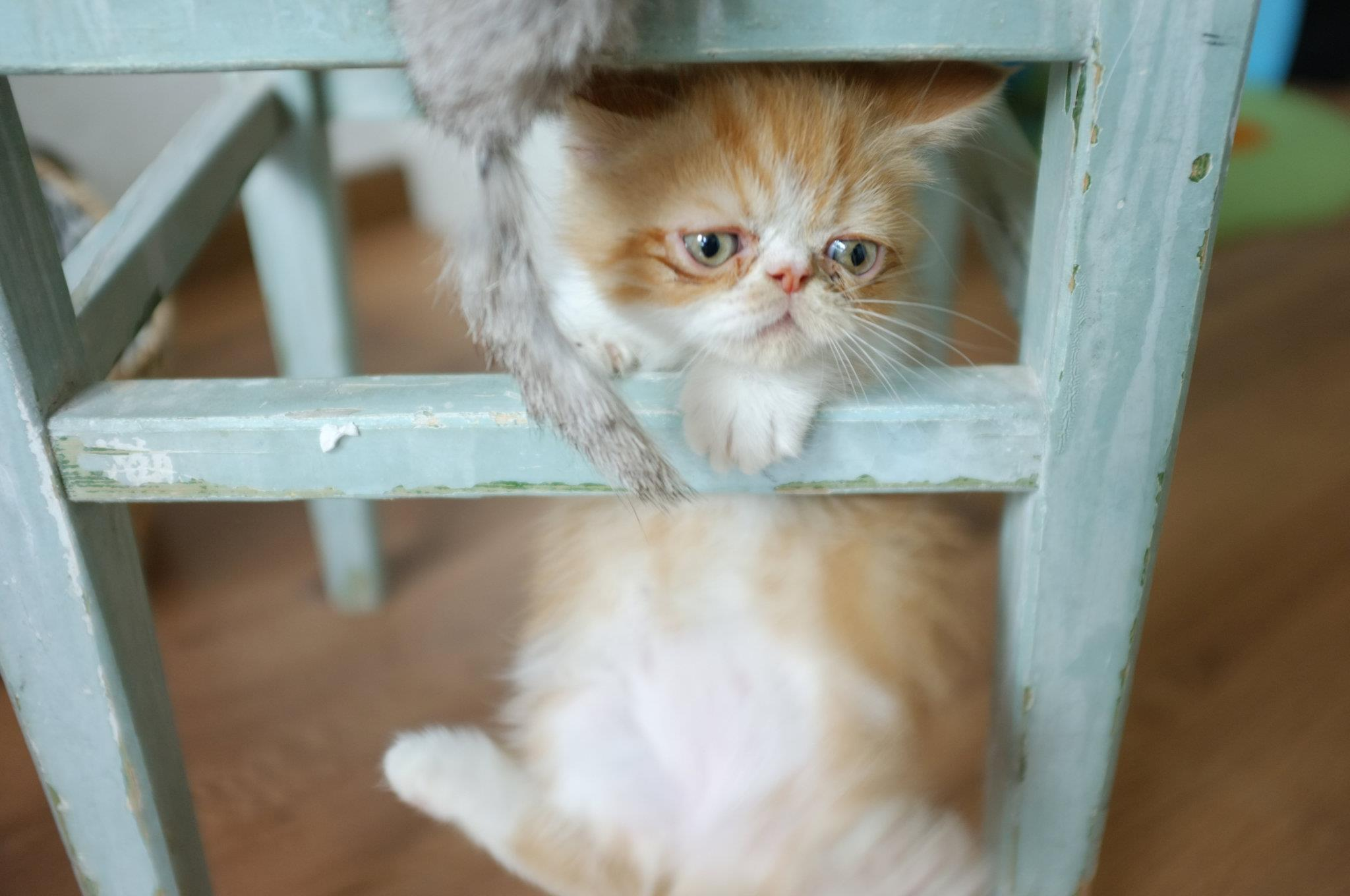 kitten, funny, cute, pastel