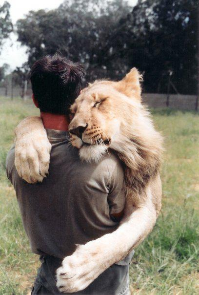 lion, human, friend, friends, photography