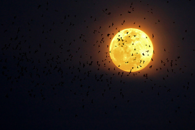 moon, yellow, birds, black, dark
