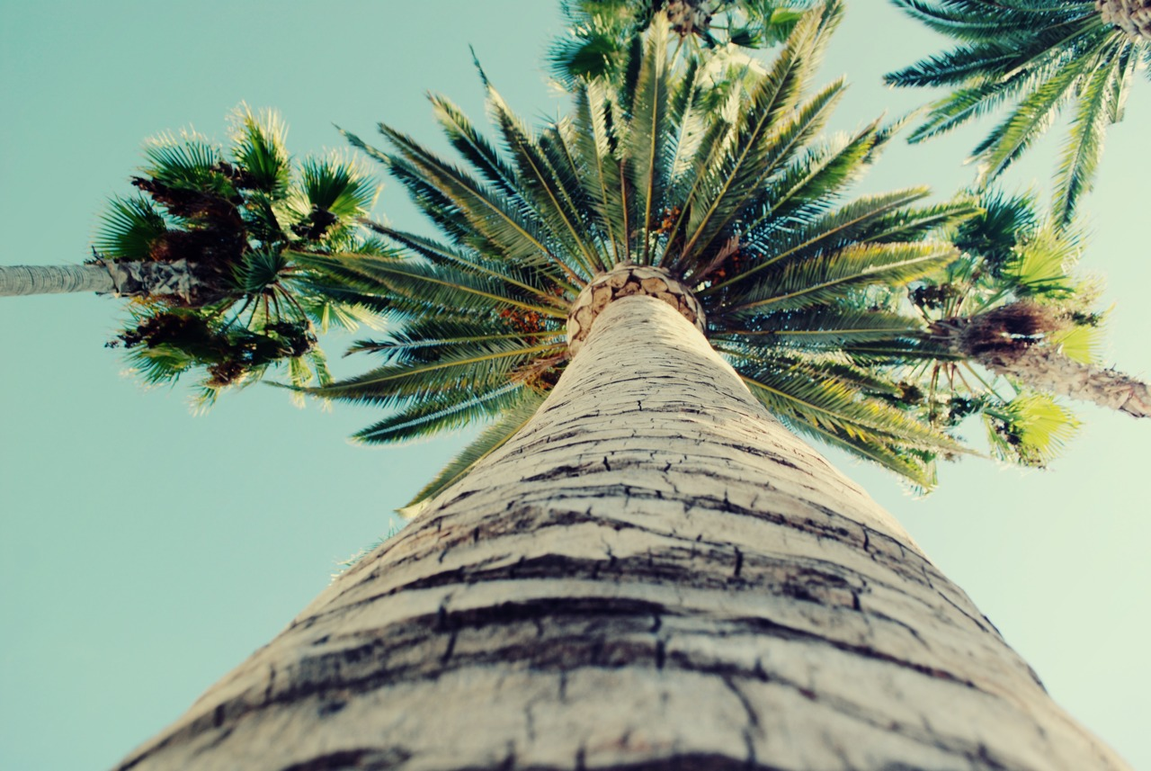 palm, palms, summer, holiday, beautiful