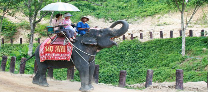 phuket elephant treakking