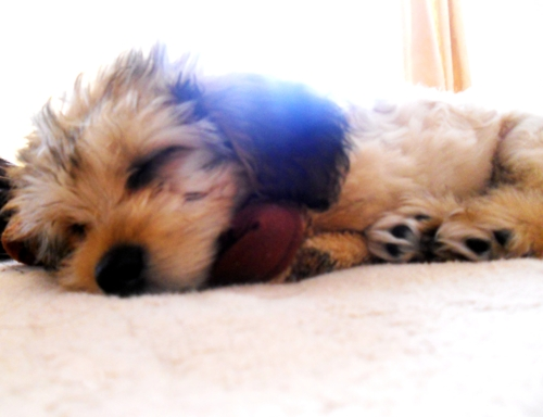 puppy, cute, amazing, sleep