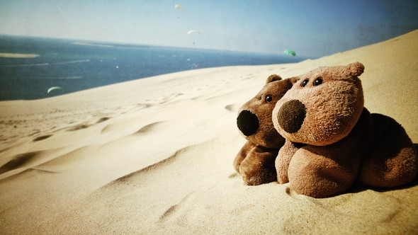 sand, teddy bears, ocean