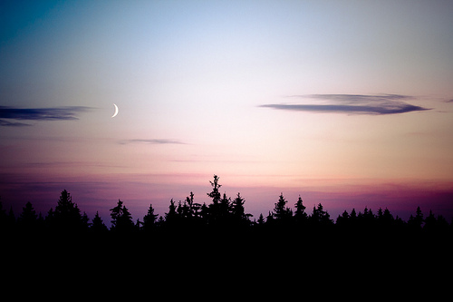 sky, forest, tree, trees, night