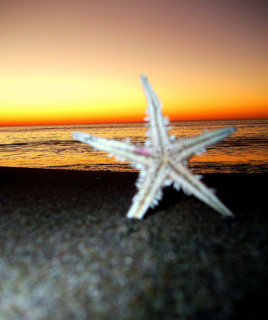 starfish sunset albania nature