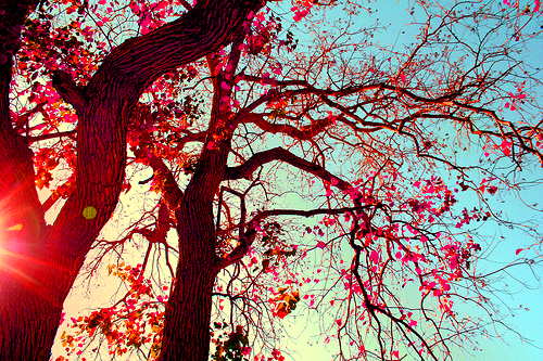 trees, tree, pink, nature, summer