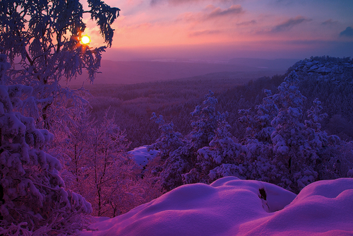 amazing, beautiful, nature, photo, photography, purple, sky, snow, sun, tree, trees, violet, winter