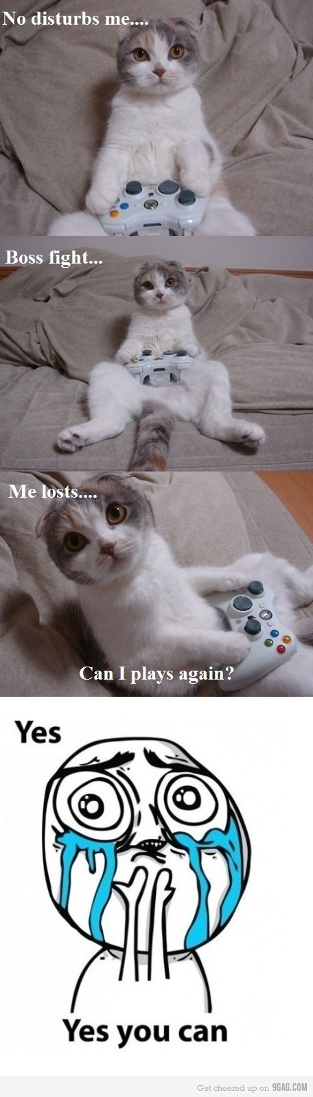 9gag, aaaaaaaaaaaaaaawn, cat, cute, cutie, game, omg, ooooh, play, sweet, xbox