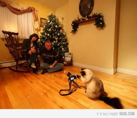 9gag, awesome, camera, cat, celebration