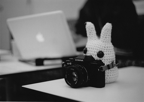 adorable, apple, bunny, cute, funny, photo, pictures