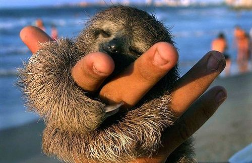 adorable, arm, baby, cute, dorbs, hand, hug, sleepy, sloth