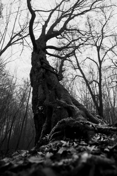 alone, amazing, awesome, b&w, black and white, cold, cool, dark, darkness, day, died, forest, heart, hurt, loneliness, lovely, nature, photo, photography, remember, sad, separated with a comma, separated with comma, sky, tree, trees