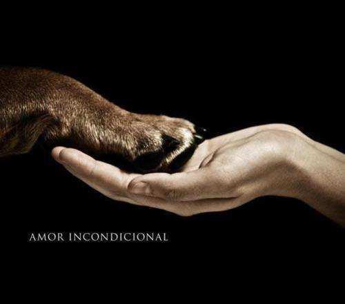 amor, animal, dog, fur, hand