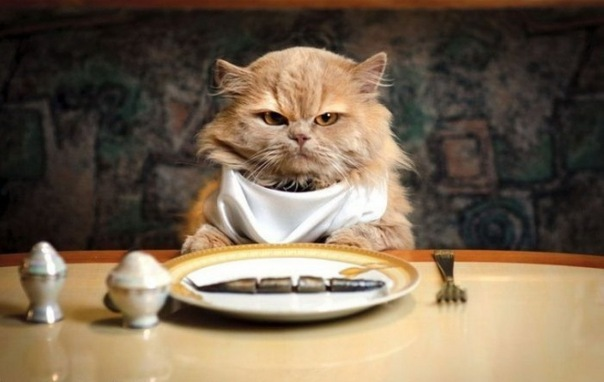 angry, cat, dinner, fish, funny