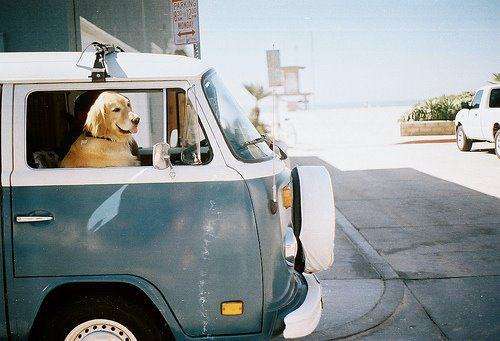 animal, animals, car, cute, dog, dogs, funny, picture, street, summer, van