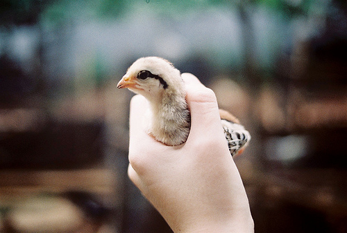animal, baby, bird, cute, hand