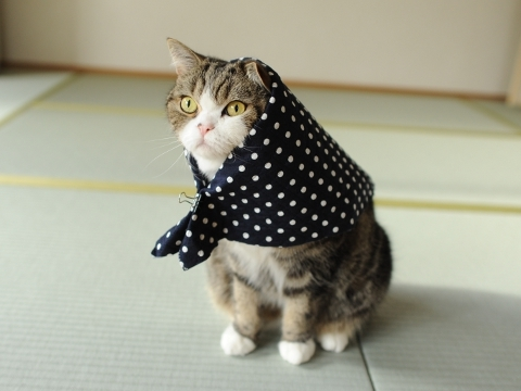 animal, cat, cute, kitten, maru
