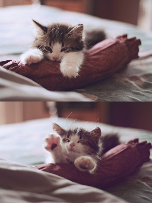 animal, cat, cute, kitty, miau, morning