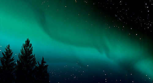 arctic, aurora, night, north, sky, stars, trees