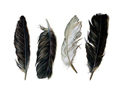 art, black, brown, feathers, white